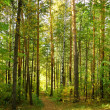Green forest — Stock Photo #1200978