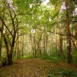 Green forest — Stock Photo #1201039