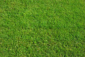 Green grass background — 图库照片
