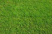 Pozadí zelené trávy — Stock fotografie