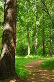 Slingerend pad door mistige bos — Stockfoto