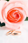 Two gold wedding bands beside a pink ros — Stock Photo