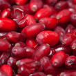 Barberries background - Stock Photo