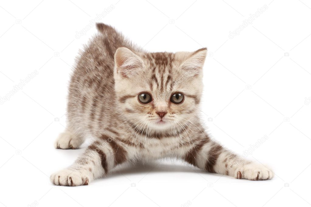 Funny kitten — Stock Photo #1178129