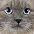 Cat portrait - Foto Stock