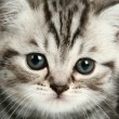 Stock Photo: Kitten portrait