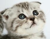 Kitten portrait — Stock Photo