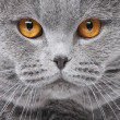 Cat portrait — Stockfoto