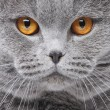 Foto de Stock  : Cat portrait