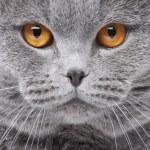 猫の肖像画 — ストック写真