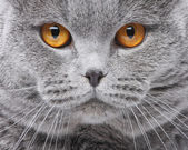 Cat portrait — Stock Photo