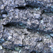 Bark of tree — Stock Photo #1319687