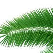 Palm brunch — Stock Photo #1202402