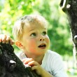 Little boy on tree — Stock Photo