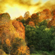 Golden autumn — Foto Stock