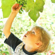 Royalty-Free Stock Photo: Little kid and grape