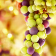 Royalty-Free Stock Photo: Beautiful grape background