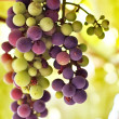 Grape — Stock Photo #1203380