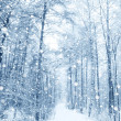 Stock Photo: Winter fairytale