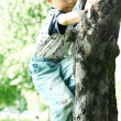 Stock Photo: Tree-climber