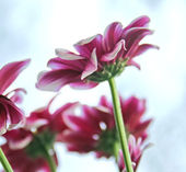Schönen frühlingsblumen — Stockfoto