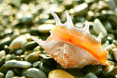 Beautiful shell on seashore — Stock Photo