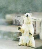 Polar bear in zoo — Stock Photo