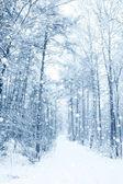 Winter fairytale — Stock Photo