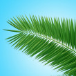 Palm brunch — Stock Photo