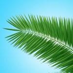 Palm brunch — Stock Photo