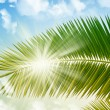 Palm in sunlight - Stock Photo