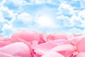 Soft pink petals in heaven — Stock Photo