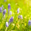 spring wildflowers — Stock Photo