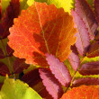 Autumn leaves — Stock Photo #1235547
