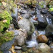 Small waterfall — Stock Photo #1237133