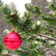 Red ball on tree — Stock Photo #1240183