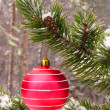 Red ball on tree — Stock Photo