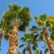 Stock Photo: Palm tree against blue sky