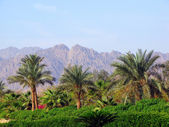 Palm trees and mountains — Stock Photo