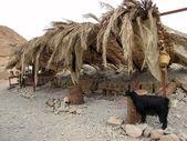 Beduínský stan — Stock fotografie