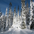 Winter forest — Stock Photo #2477531