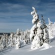 Winter forest — Stock Photo #2478244