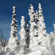 Winter forest — Stock Photo #2487991