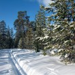 Ski track in winter forest — Stock Photo #2679486