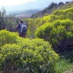 Yellow hiking trail — Stock Photo #1947712