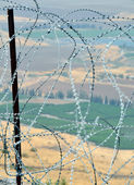 After barbed wire — Stock Photo