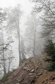 Misty summer day — Stock Photo