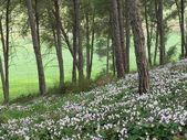 Cyclamen blossom — Stock Photo