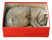 Cat package — Stock Photo