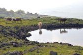 Golan meadows — Stock Photo